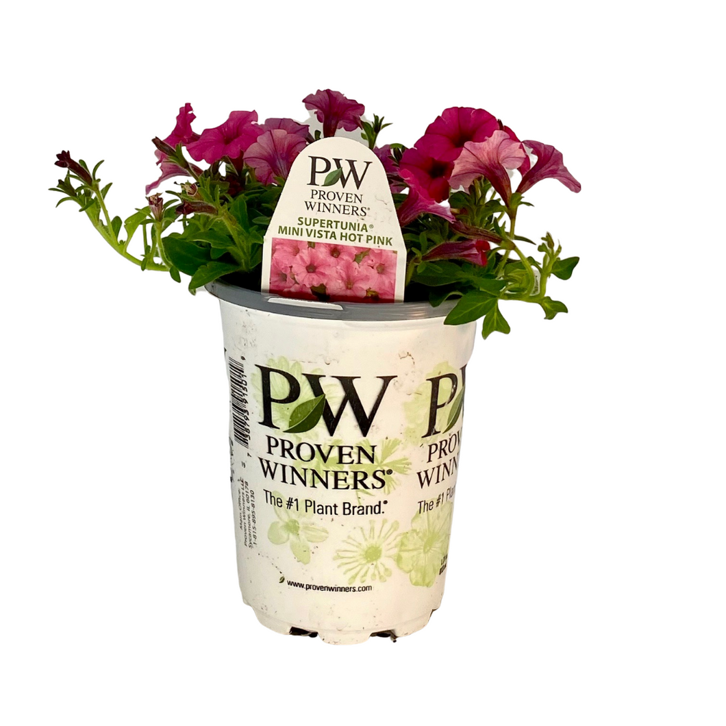 Proven Winners - Supertunia - Mini Vista - Hot Pink