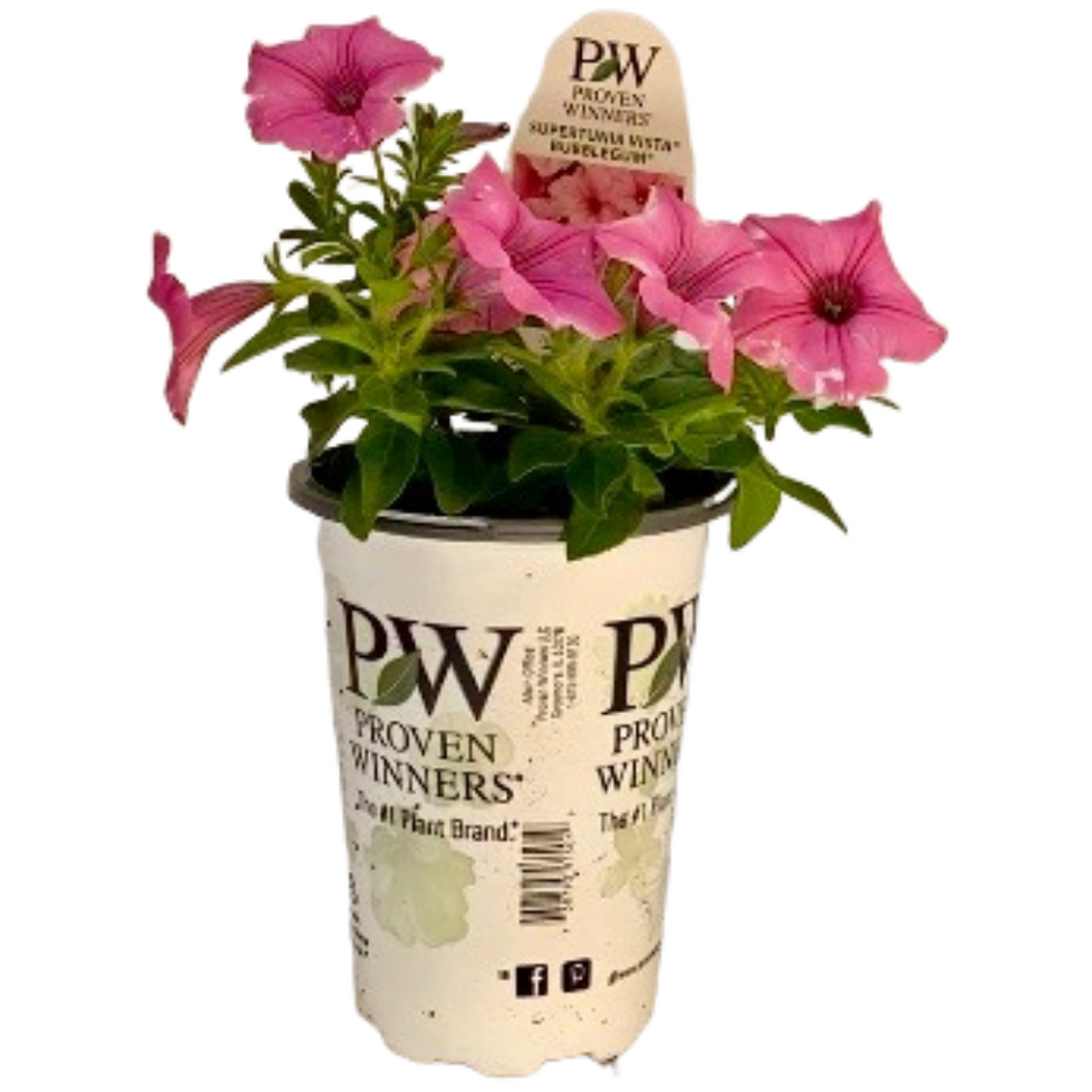 Proven Winners - Supertunia - Vista - Bubblegum