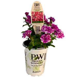 Proven Winners - Supertunia - Double - Sharon