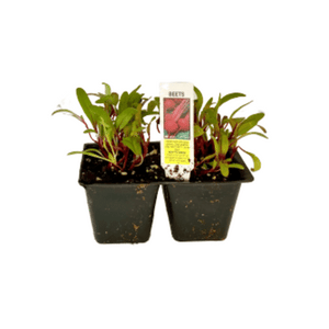 Beets 4 Plant Cell Pack