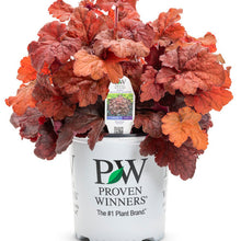 Load image into Gallery viewer, Proven Winners - Heuchera - Primo Mahogany Monster