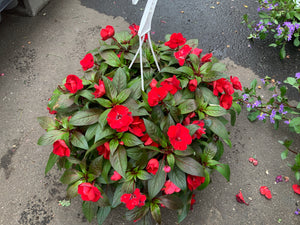 "10.5"" NEW GUINEA IMPATIENS HANGING BASKETS (RED)"