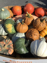 Load image into Gallery viewer, Medium and Large Gourds - $.79 per pound