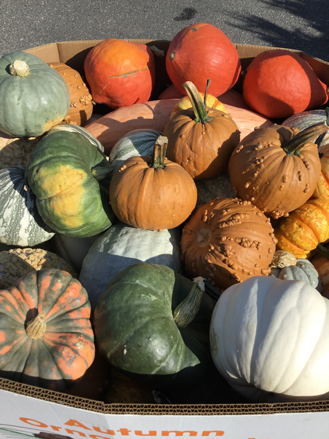 Medium and Large Gourds - $.79 per pound
