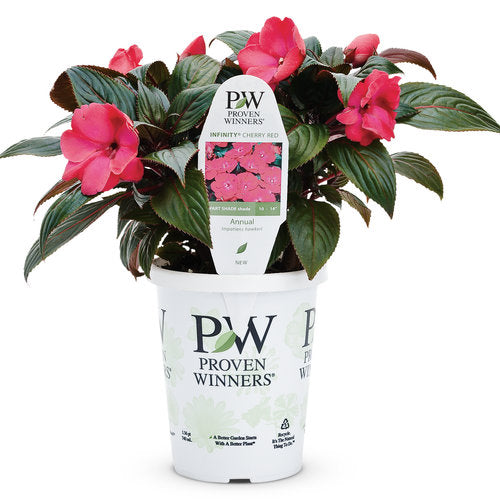 Proven Winners - New Guinea Impatiens - Infinity Cherry Red