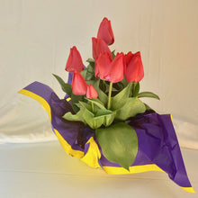 "Load image into Gallery viewer, Tulip - Red 8"" Pot"