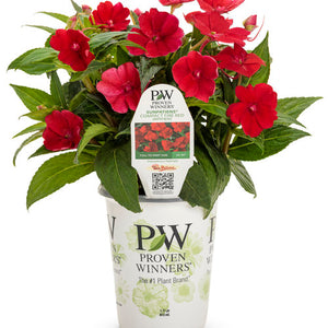 Proven Winners - SunPatiens - Compact Fire Red