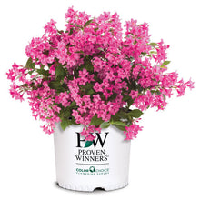 Load image into Gallery viewer, Proven Winners - Weigela - Sonic Bloom Pink