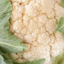 "Load image into Gallery viewer, Cauliflower Plant 4.5"" Pot"