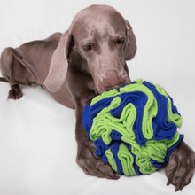 For The Love Of Dog - Interactive Sniffer Ball