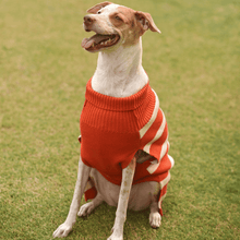Mutt Of Course Dog Sweater - Orange Knitted TurtleNeck