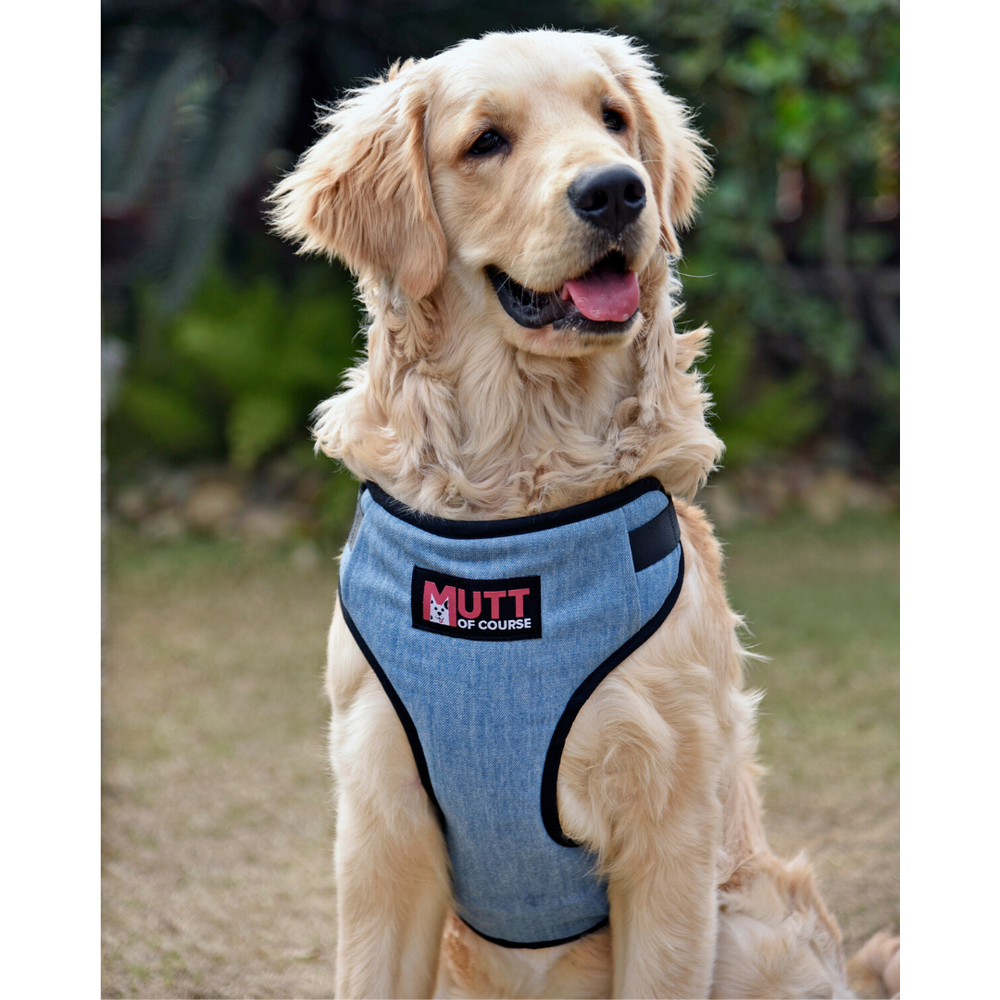 Mutt Of Course Light Denim Harness