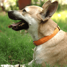 Petsy Bandhani Dog Collar - Orange