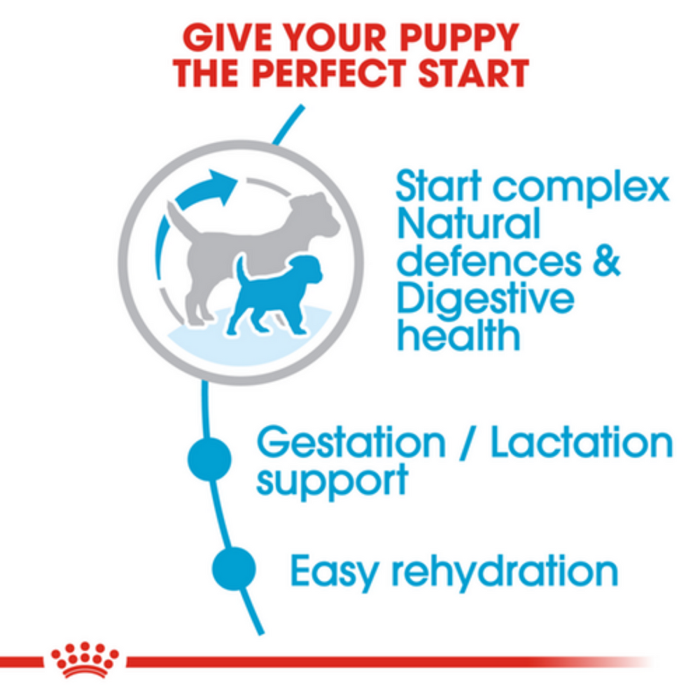 Royal Canin Mini Breed Starter