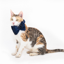 Petsy Amaya Cat Bow Tie & Strap - Navy Blue