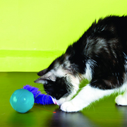Kong Cat Toys - Laser Craze