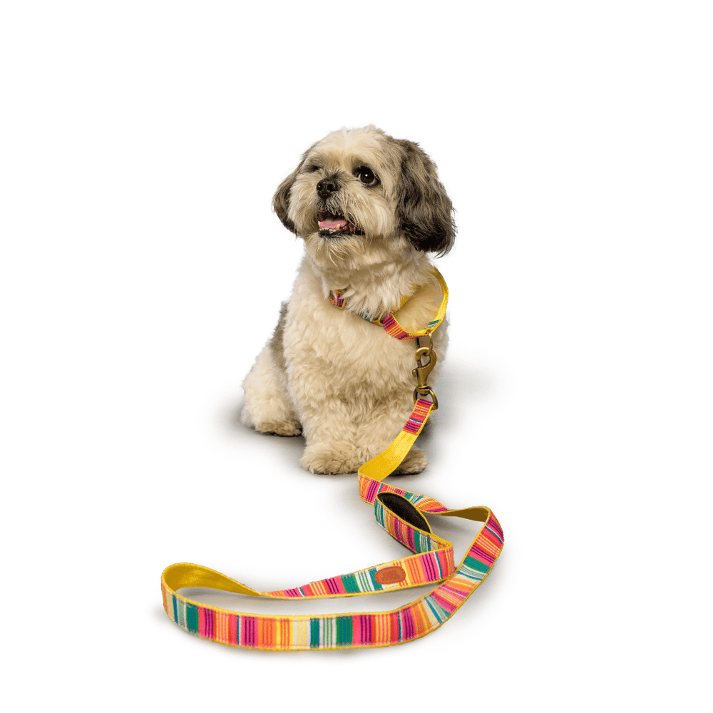 Petwale Leash - Colourful Stripes