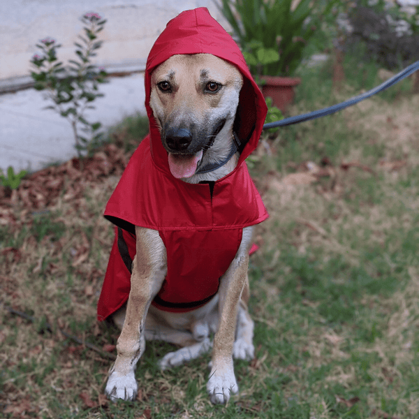 Mutt Of Course Dog Raincoat - Red