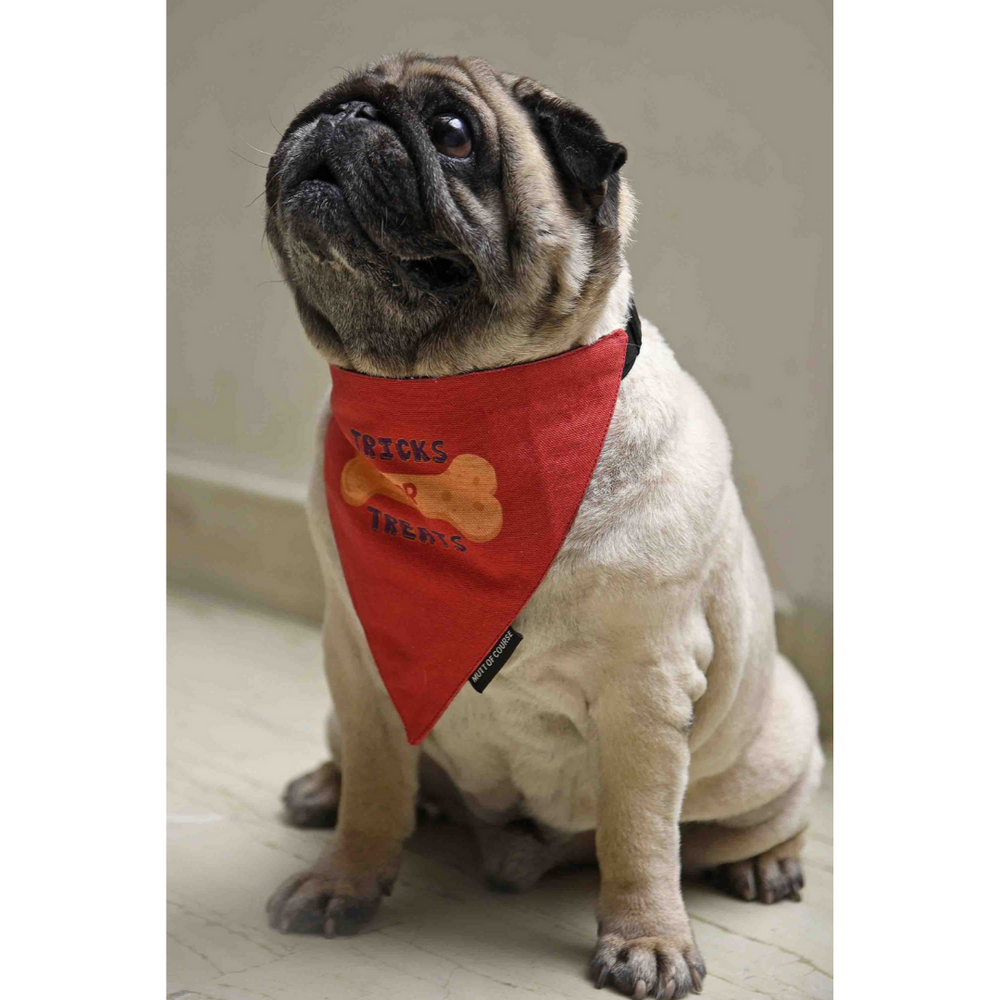 Mutt Of Course Tricks for Treats Bandana