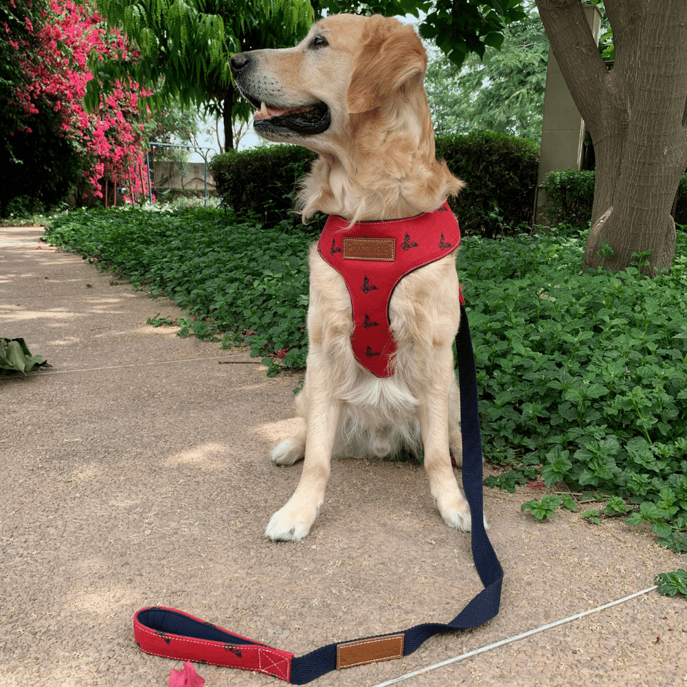PoochMate Harness - Red Chirpy