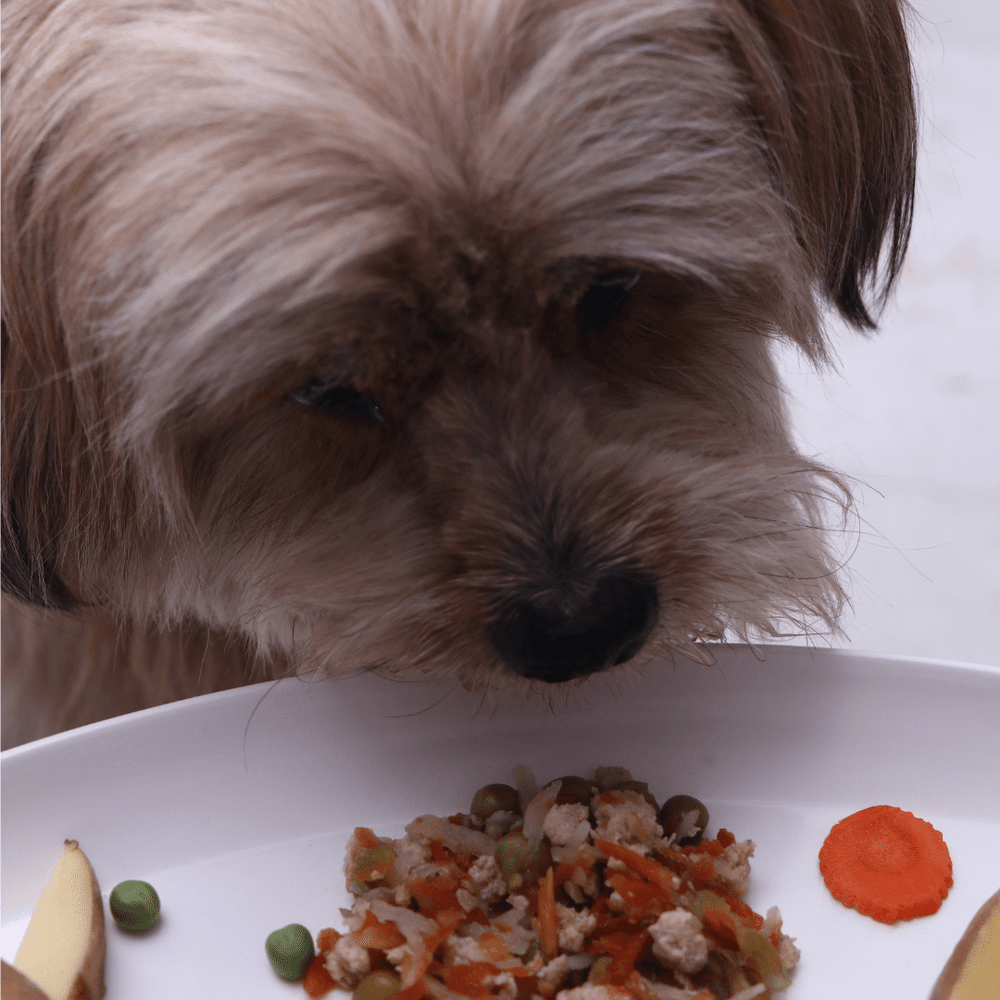 Fresh For Paws - Chicken Stew (100g)