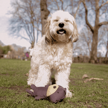 Becopets Dog Toys - Recycled Plastic Toys - Toby The Teddy