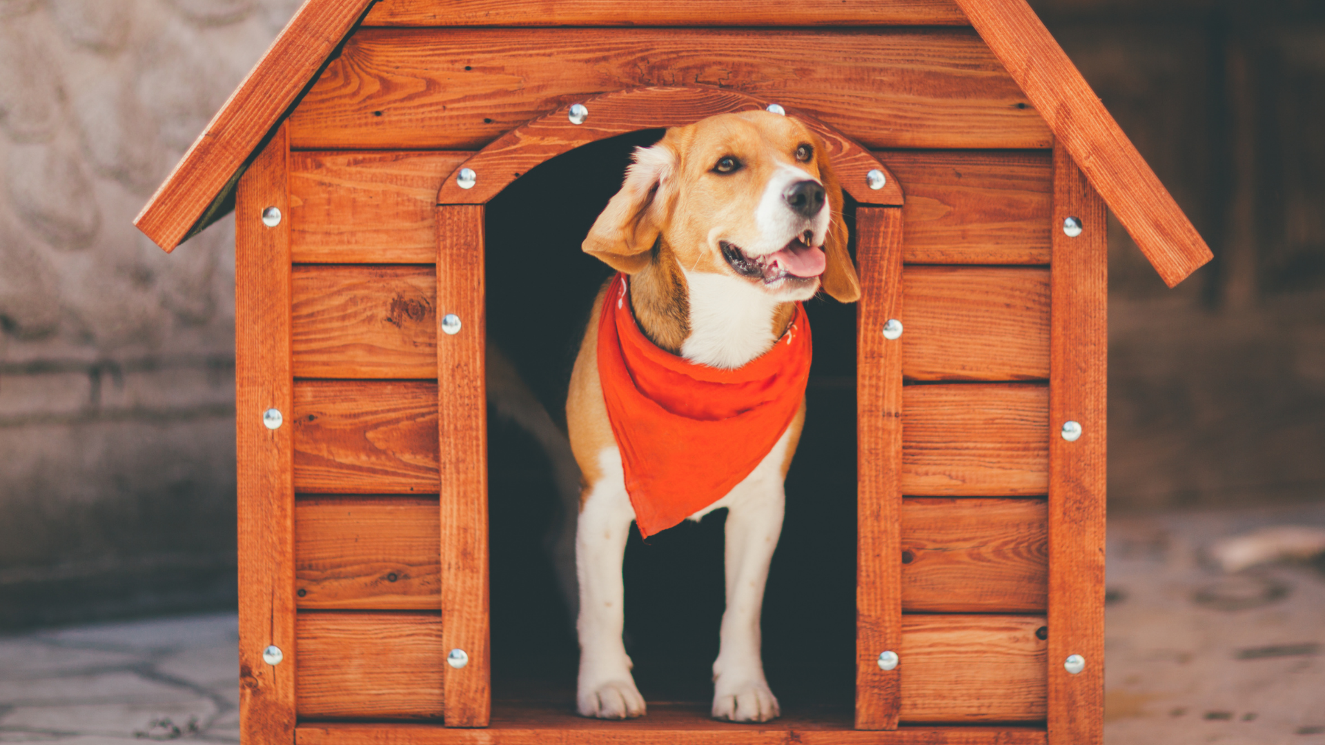 Should I get a bed, kennel or crate for my dog?