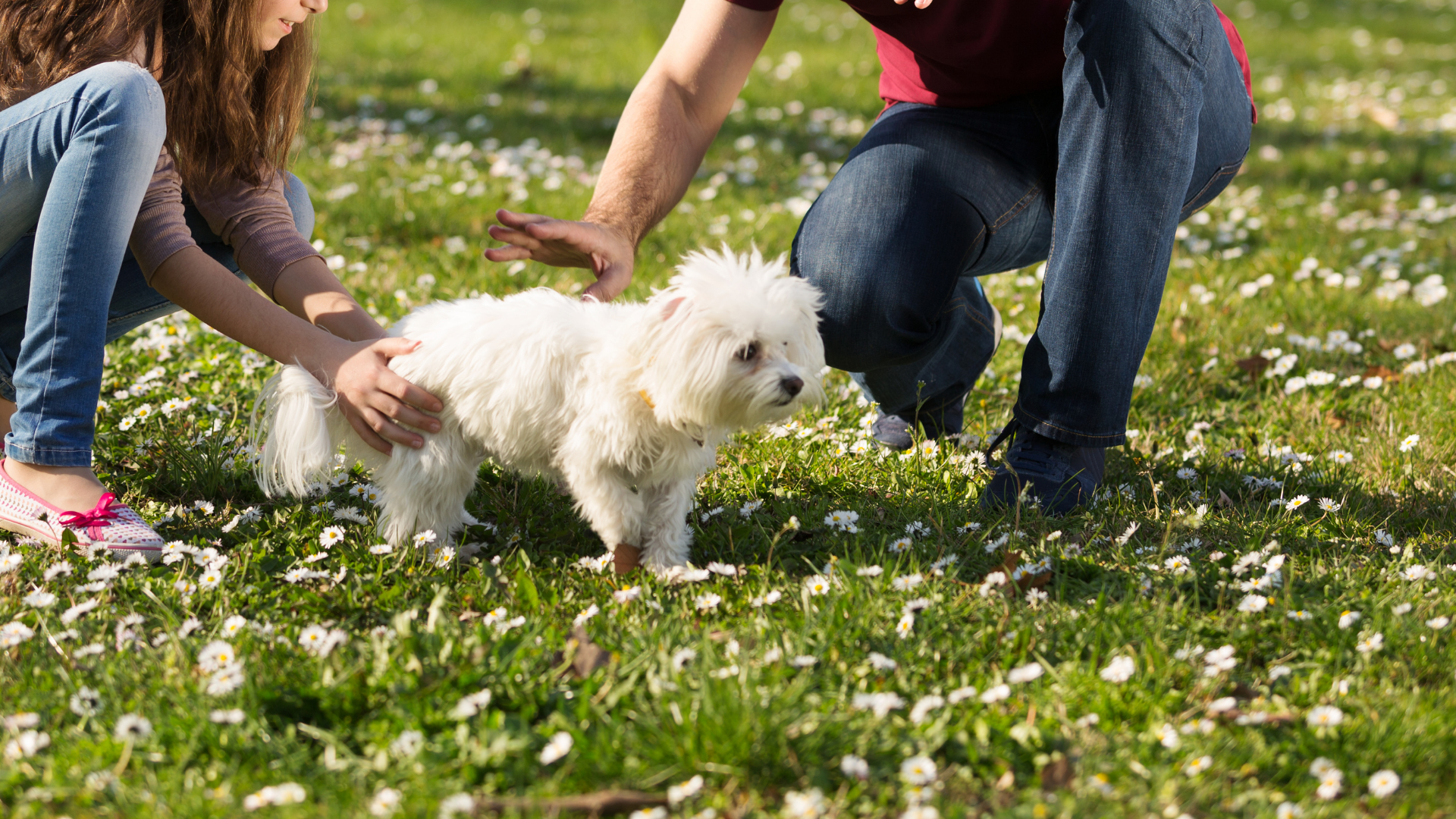 Integrating your puppy with the family