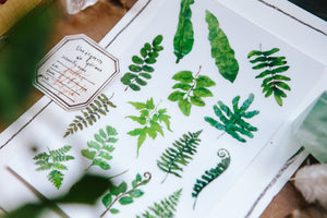 OURS Studio Fern Transfer Sticker Sheet Pack