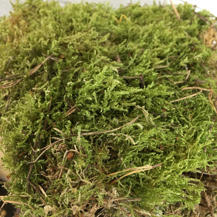 Dried small pet moss