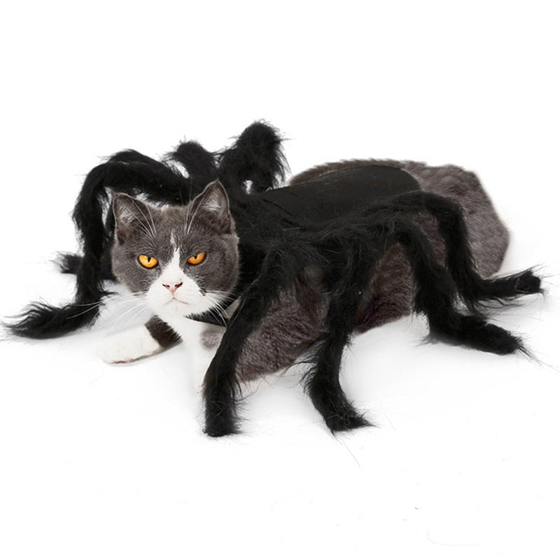 Halloween Pet Spider  Costume For Dogs  and Cats