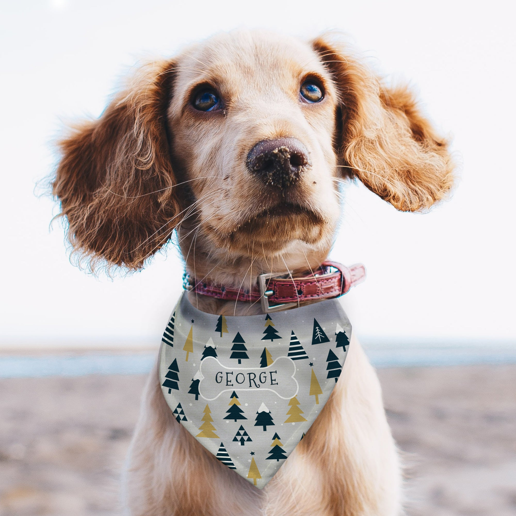 Image of a spaniel dog wearing a personalised bandana for dogs. The bandana features a modern Christmas tree design and has a maximum strap length of 43cm making it suitable for small and medium sized dogs. The bandana features a printed bone in the centre of the bandana and it can be personalised inside the bone with a name of your choice of up to 12 characters which will be printed in upper case text.