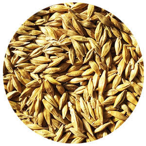 Barley, Fall VNS