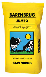 Annual Ryegrass, Jumbo