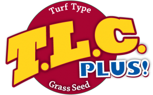 TLC Plus Turf Tall Fescue