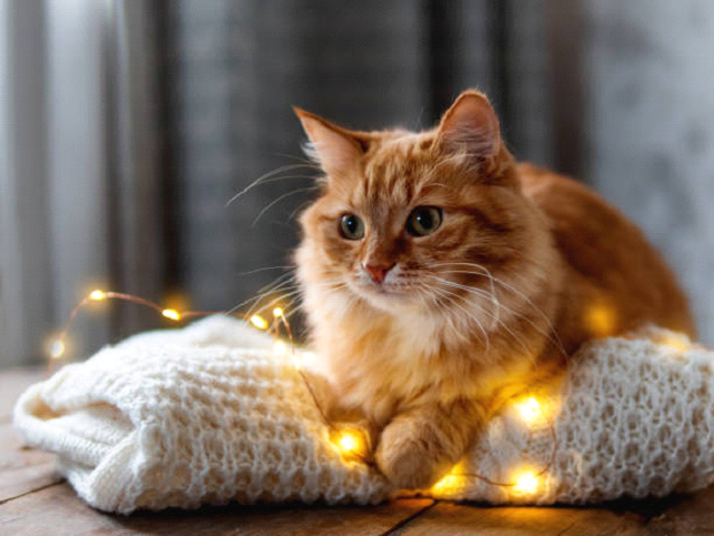 Golden Cat Laying on lights