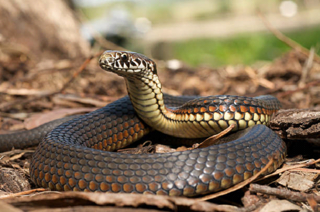 snake in a forest