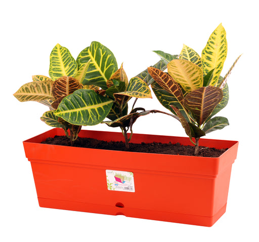 Mintra Home Garden Pot - Rectangle (19inW x 6.75H) - Mintra USA