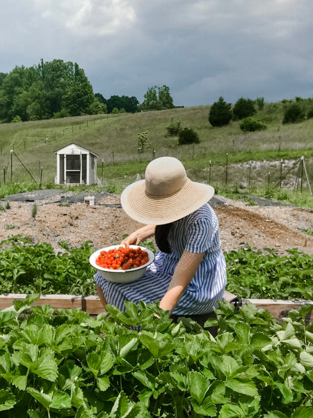 Pyne & Smith customer, Erin, hunting for strawberries in her striped linen dress