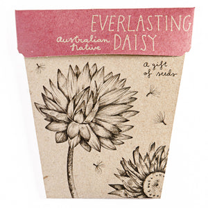 Card & Everlasting Daisy Gift of Seeds