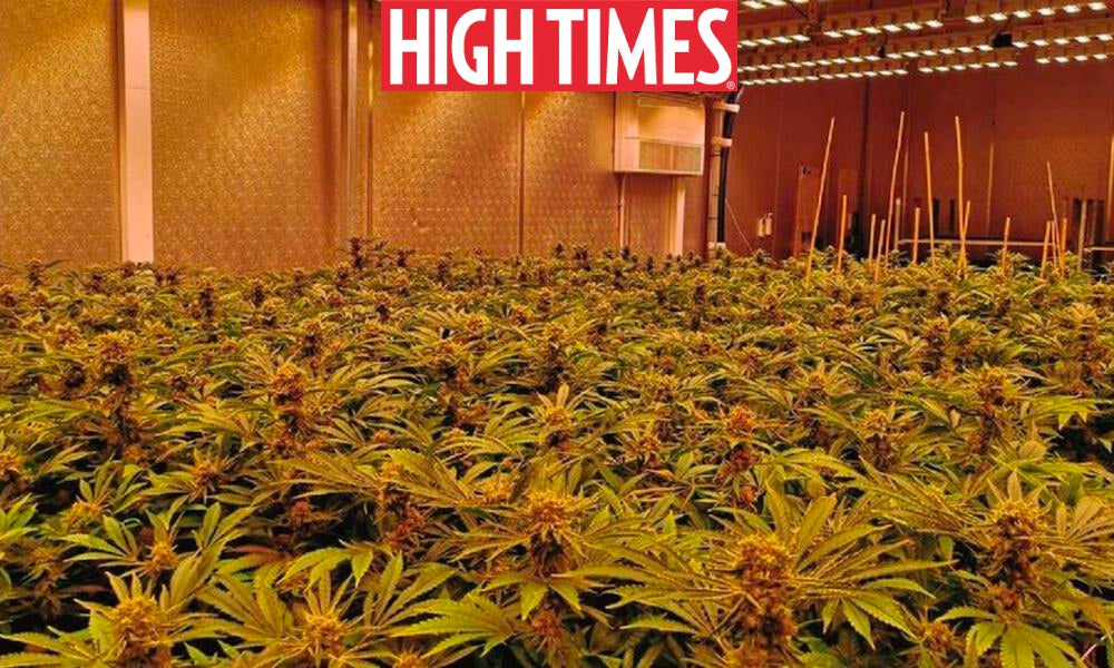 High Times Article: Expert Lighting Advice For Taking Your Grow To The Next Level