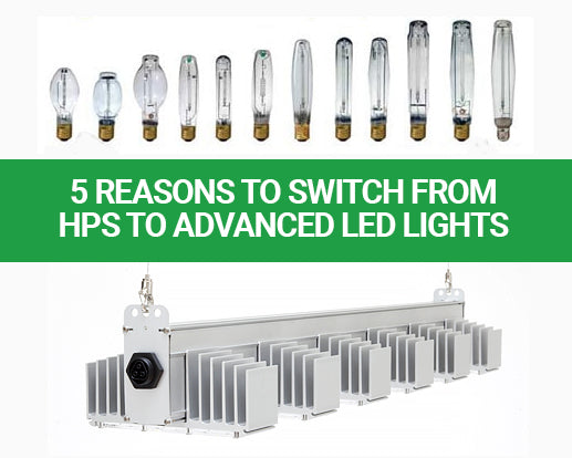 5 Reasons to Switch from HPS to Advanced LED Grow Lights