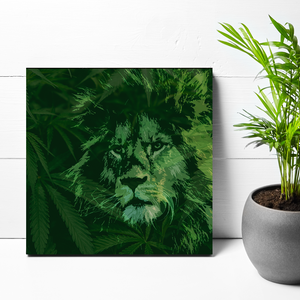 12x12 KING OF THE WEED JUNGLE