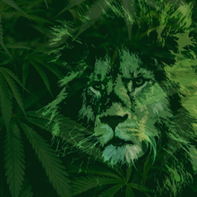 Load image into Gallery viewer, 20x20 KING OF THE WEED JUNGLE