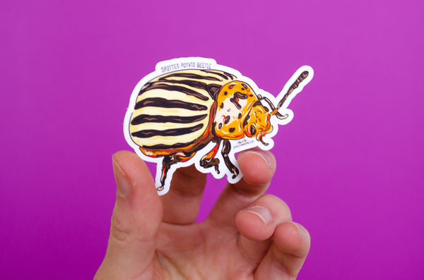 Sticker: Spotted Potato Beetle