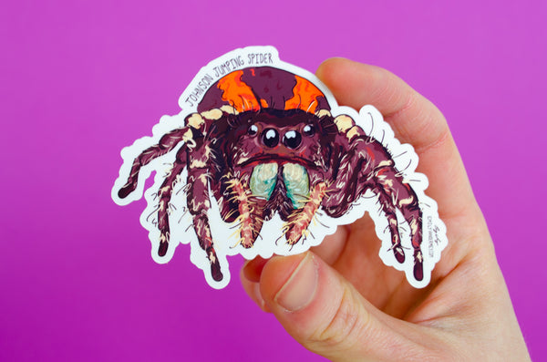 Sticker: Johnson Jumping Spider
