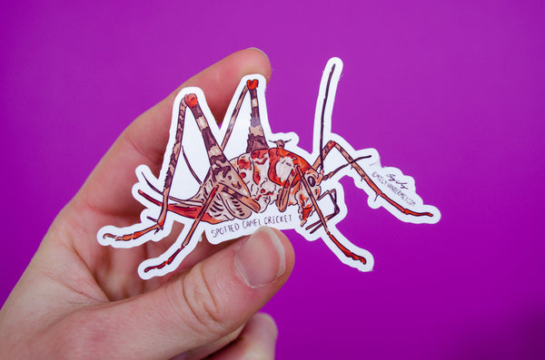 Sticker: Spotted Camel Cricket
