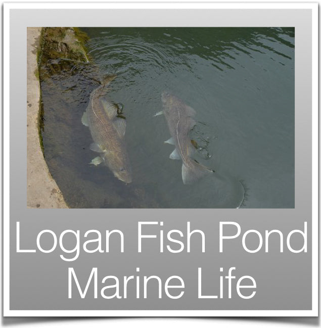 Logan Fish Pond Marine Life