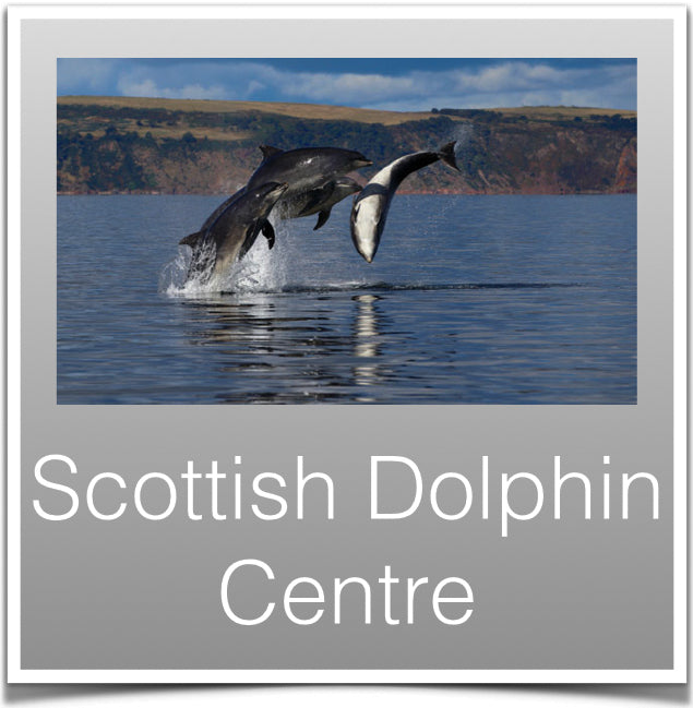 Scottish Dolphin Centre