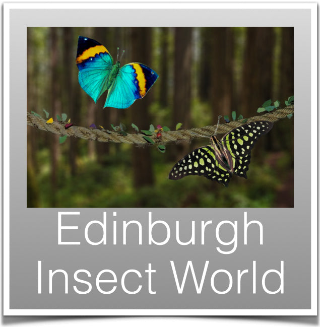 Edinburgh Insect World